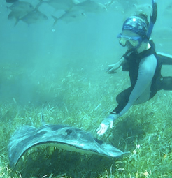 Woman scuba dives with a stingray